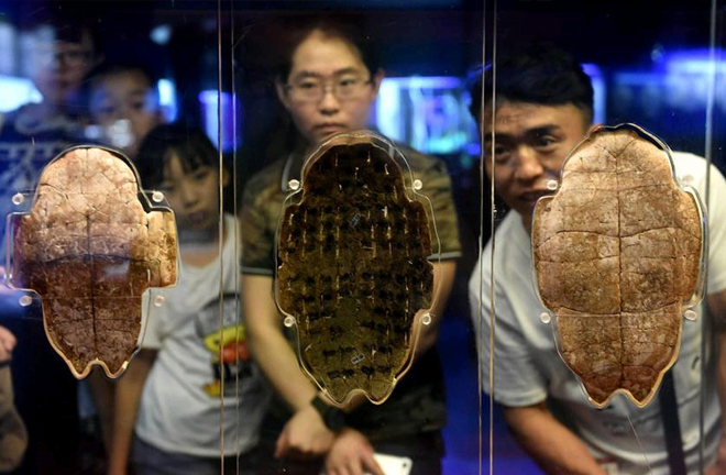 Archaeology aids reconstruction of China's ancient history