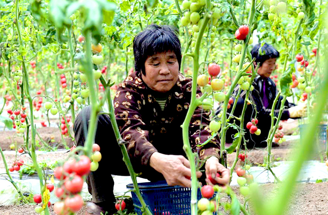 Agricultural crowdfunding to make up for financial shortages in rural areas